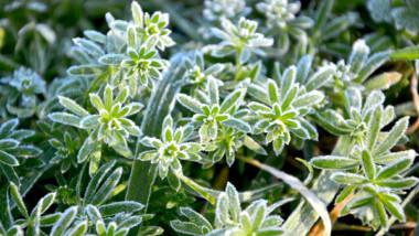 Comment protéger ses plantes du gel?
